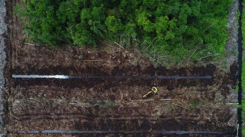 Abgeholzter Regenwald auf Borneo
