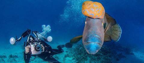Tobias Friedrich fotografiert im Meer einen Fisch