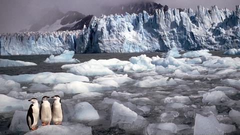 Pinguine auf der Antarktis