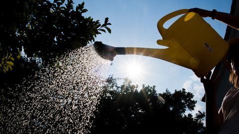 Eine Fraue gießt Wasser aus eine Gießkanne