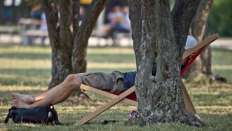 Ein Mann sitzt auf einem Liegestuhl unter schattenspendenden Bäumen in einem Frankfurter Park.