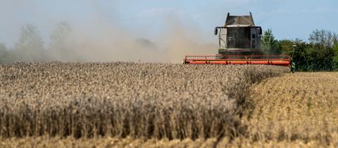 Ein Mähdrescher erntet ein Weizenfeld in Bayern.