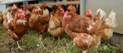 Hühner Hessen