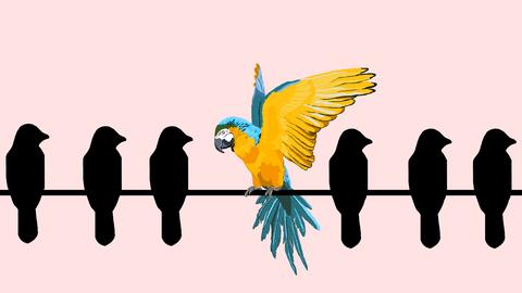Silhouetten von Paradiesvögeln auf einer Stange, einer sticht farbenprächtig heraus
