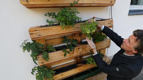 """Schaugarten """"Urban Gardening"""""""