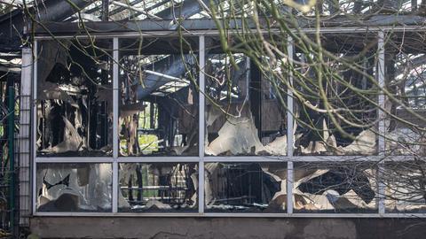 Abgebranntes Affenhaus im Krefelder Zoo