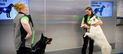 Die Covid-19-Spürhunde Valo und E.T. am Flughafen in Helsinki