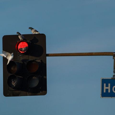 """Rote Ampel, daneben ein Schild mit der Aufschrift """"Hollywood"""""""