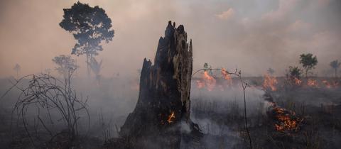 Der Amazonas-Regenwald in Brasilien brennt