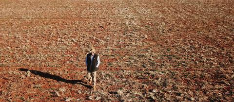 Ein australischer Farmer geht über sein vertrocknetes Rapsfeld