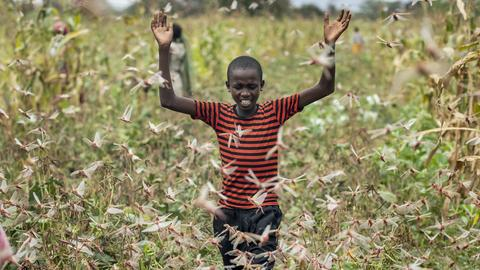 Ein schwarzer Junge läuft mit erhobenen Armen durch einen Heuschreckenschwarm.