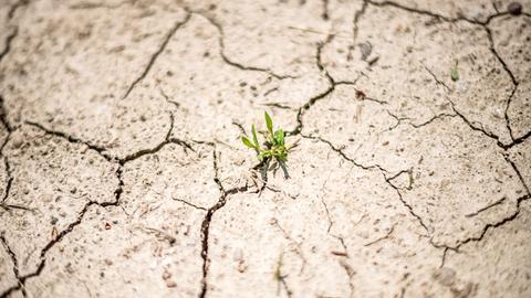 Eine Pflanze wäschst aus der rissigen Erde eines Feldes.