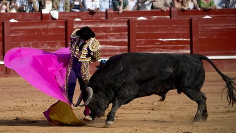 """Der berühmte Torero """"El Juli"""" kämpft mit einem Stier"""
