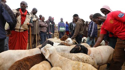 Kenia, Kimana: Massai-Männer verkaufen Schafe auf einem Tiermarkt.