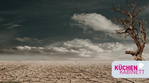 Vertrockneter, aufgerissener Boden mit kahlem, totem Baum am rechten Rand