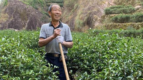 Arbeiter Yan Zhangbiao bedeckt in den Teefeldern von WuYi die Wurzeln der Teesträucher mit Erde, um sie vor der Winterkälte zu schützen.