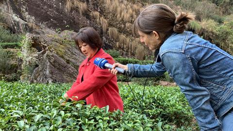 Tee-Bäuerin Huang Linqian zeigt Reporterin Birgit Eger, wie man Tee pflückt.