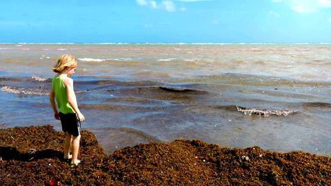 Kind an einem Strand, an dem sich die Braunalge Sargassum türmt.