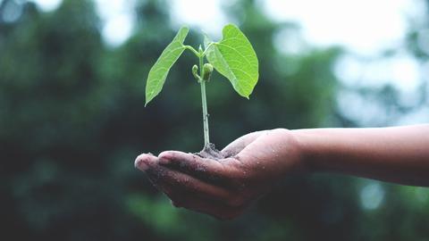 Eine offene Hand, die eine kleinen Pflanze hält